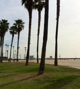 Palms on the Boardwalk