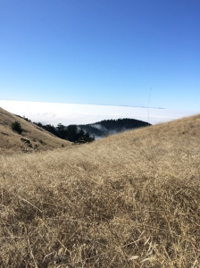 Bird's eye view of the fog